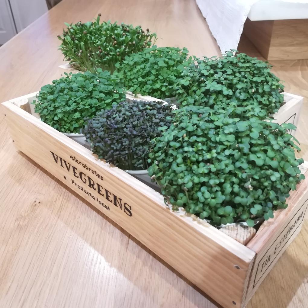 vivegreens - surtido 3